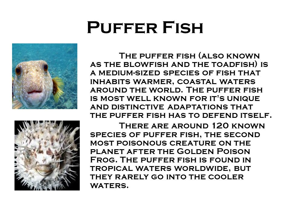 By devon cooper john o 39 brien eleyna para and katie for Puffer fish adaptations