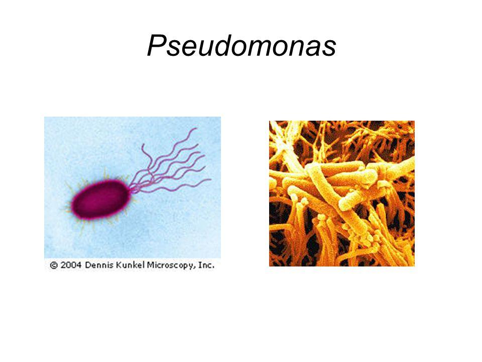 Ticarcillin Clavulanate Pseudomonas