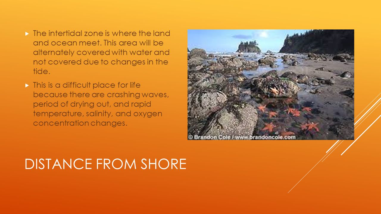 The intertidal zone is where the land and ocean meet