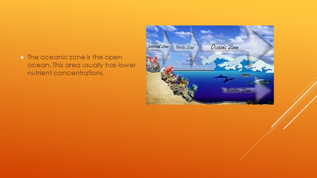 The oceanic zone is the open ocean