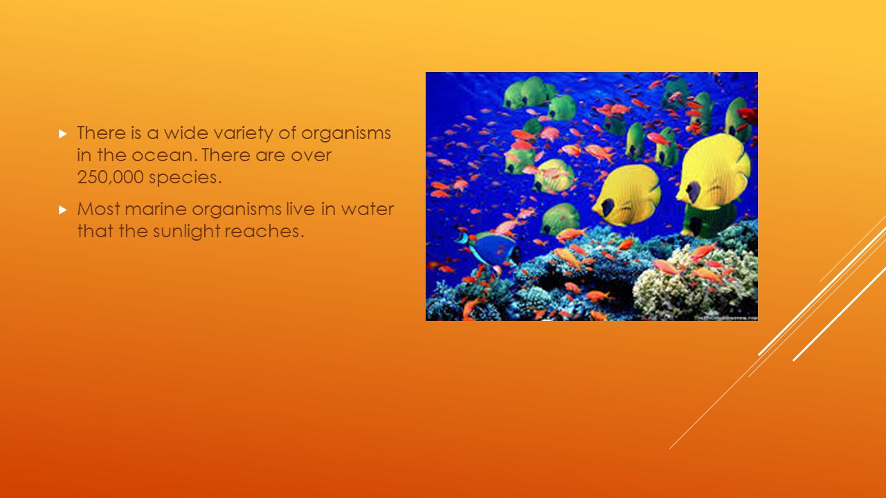 There is a wide variety of organisms in the ocean