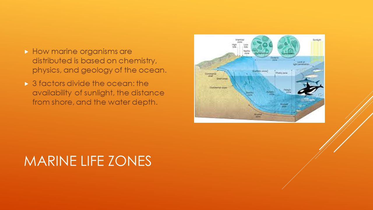 How marine organisms are distributed is based on chemistry, physics, and geology of the ocean.