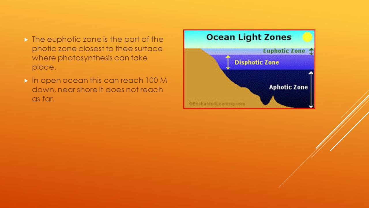 The euphotic zone is the part of the photic zone closest to thee surface where photosynthesis can take place.