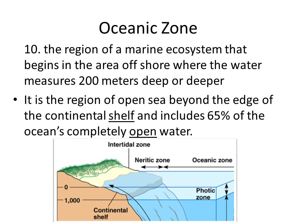 Oceanic Zone 10. the region of a marine ecosystem that begins in the area off shore where the water measures 200 meters deep or deeper.