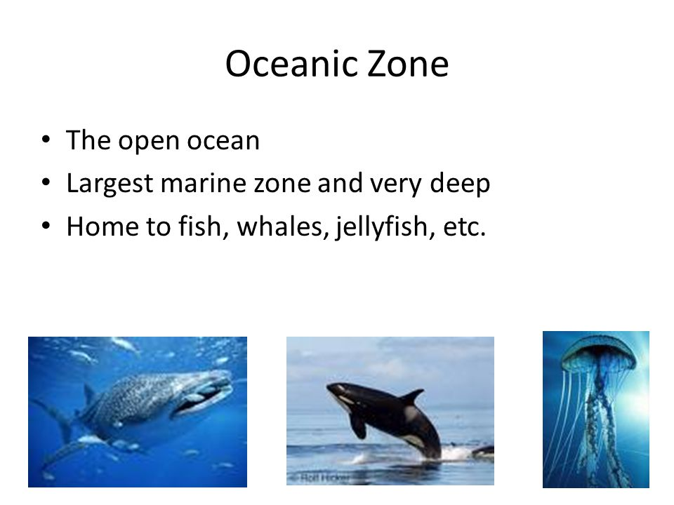 Oceanic Zone The open ocean Largest marine zone and very deep