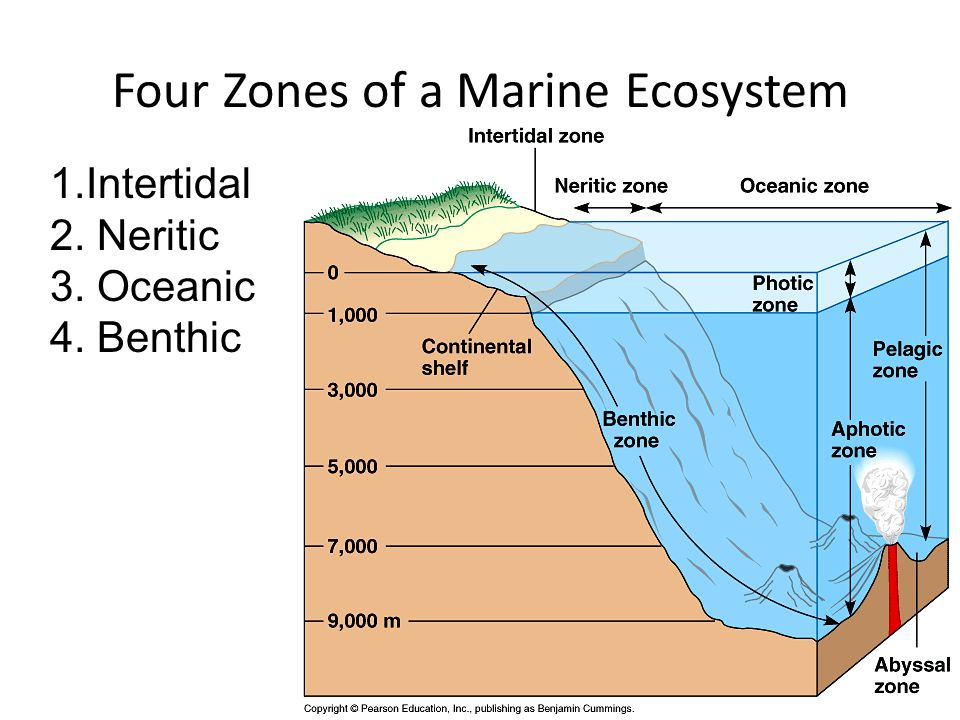 Four Zones of a Marine Ecosystem