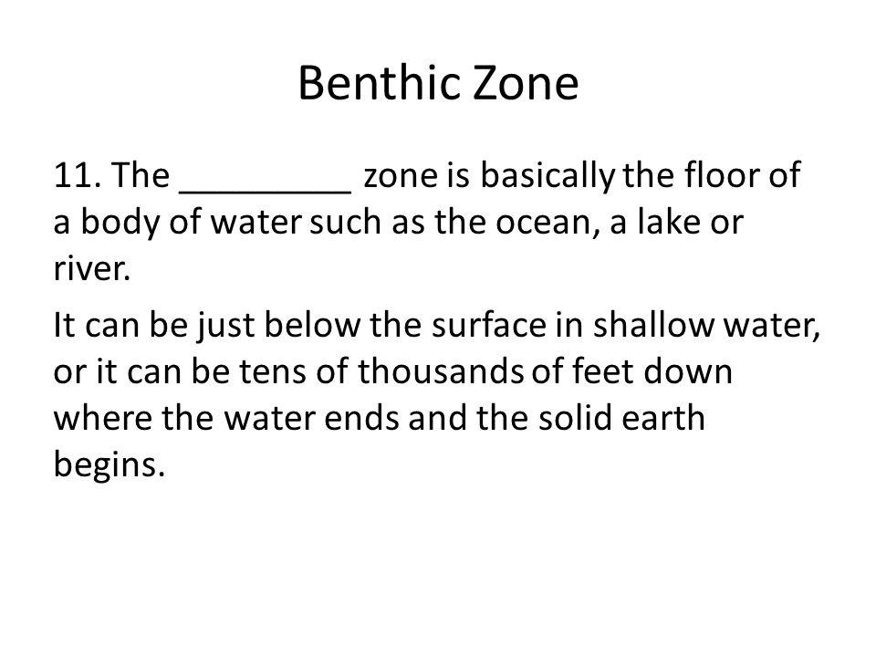 Benthic Zone