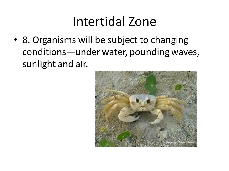 Intertidal Zone 8.