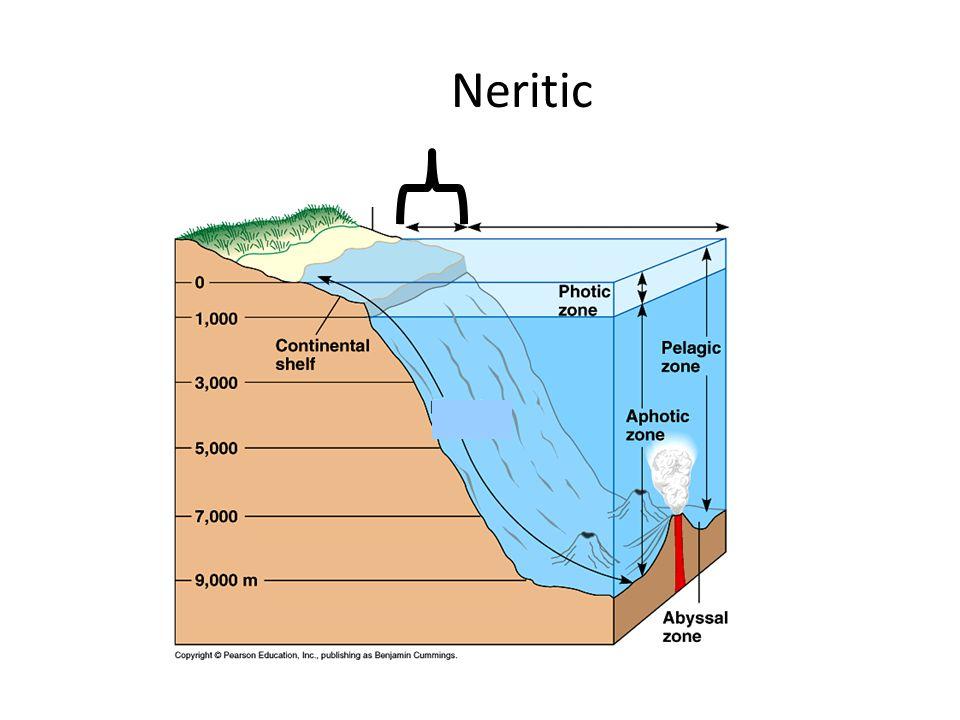 Neritic
