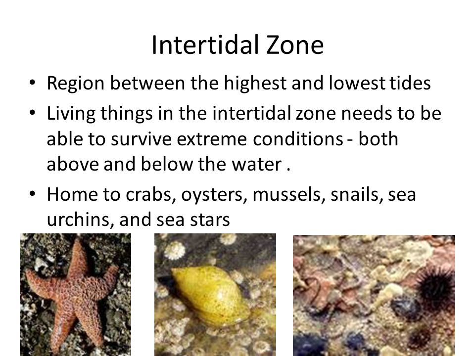 Intertidal Zone Region between the highest and lowest tides
