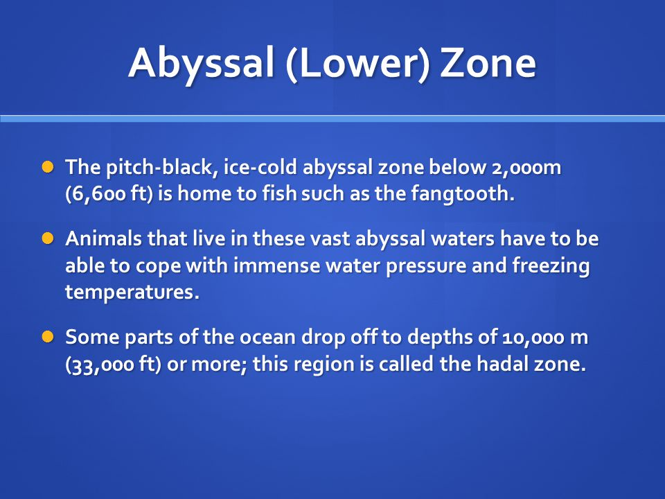 Abyssal (Lower) Zone The pitch-black, ice-cold abyssal zone below 2,000m (6,600 ft) is home to fish such as the fangtooth.
