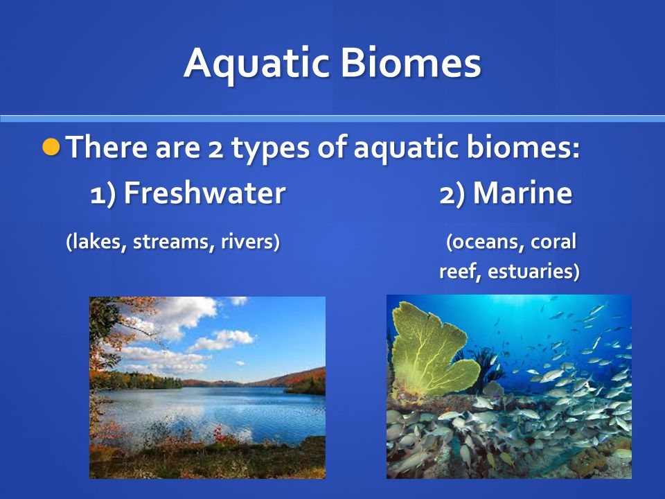 aquatic biome Time-saving video on aquatic biomes aquatic biomes include rivers, lakes, estuaries, intertidal zones and coral reefs aquatic biomes are an important part in biology and in our everyday lives.