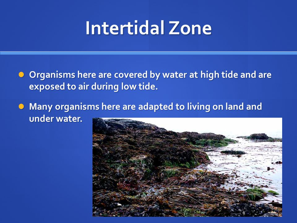 Intertidal Zone Organisms here are covered by water at high tide and are exposed to air during low tide.