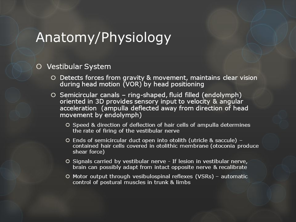 Tolle Anatomy And Physiology Of Vestibular System Ideen - Anatomie ...