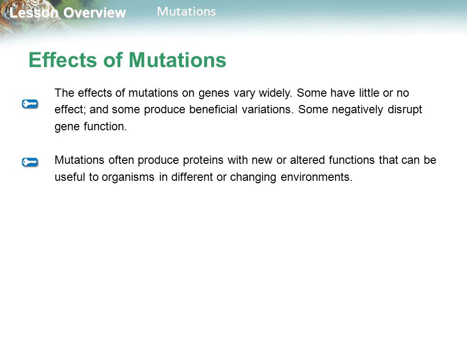 Effects of Mutations The effects of mutations on genes vary widely. Some have little or no.
