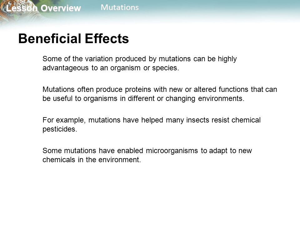 Beneficial Effects Some of the variation produced by mutations can be highly advantageous to an organism or species.