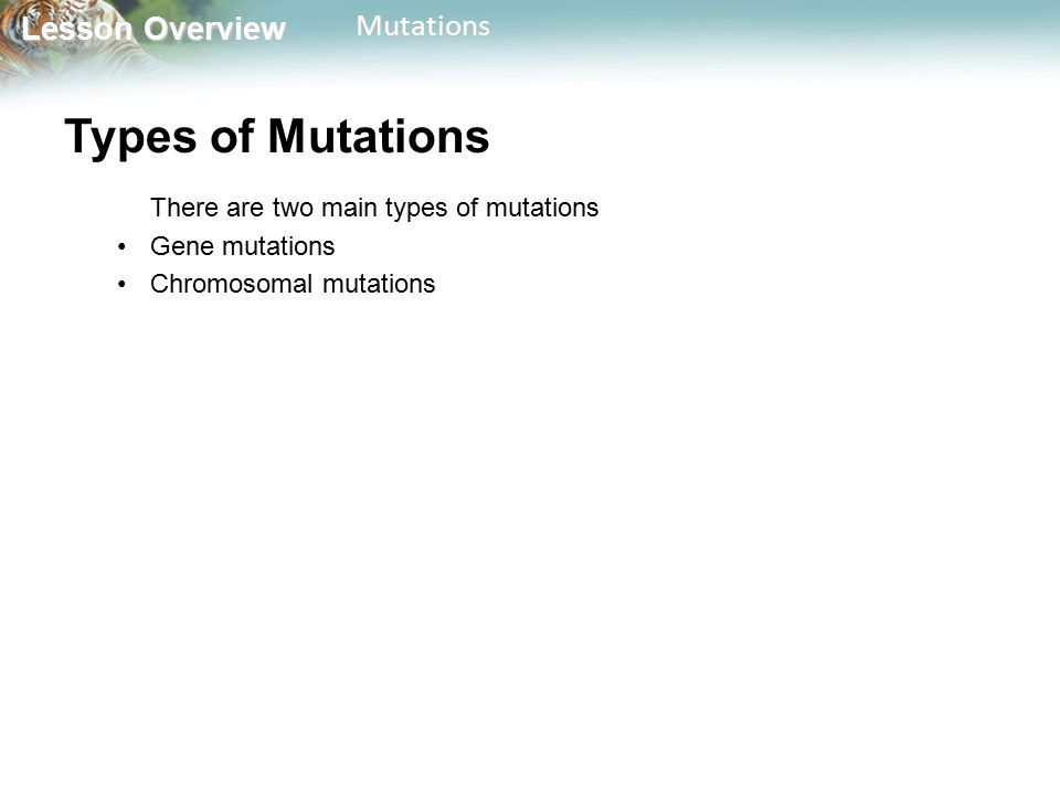 Types of Mutations There are two main types of mutations