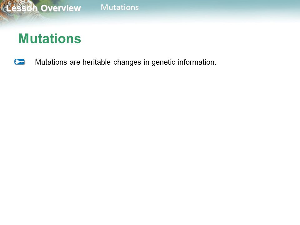 Mutations Mutations are heritable changes in genetic information.