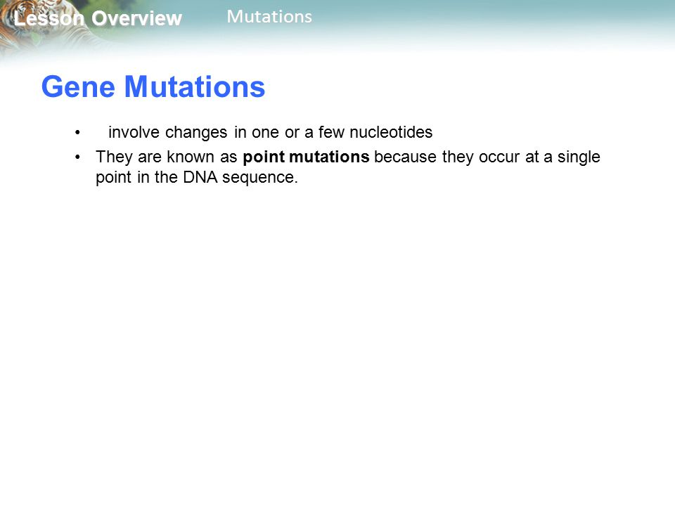Gene Mutations involve changes in one or a few nucleotides