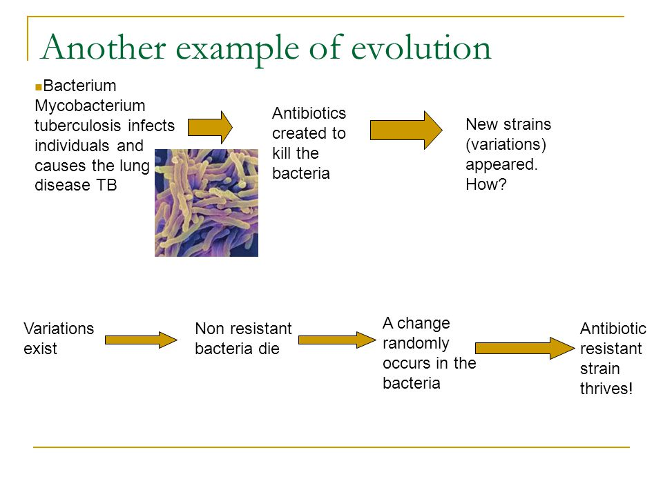 antibiotic resistance in bacteria essay example A dangerous form of drug resistance has reached the united states,  will get  worse because bacteria are becoming resistant to antibiotics.