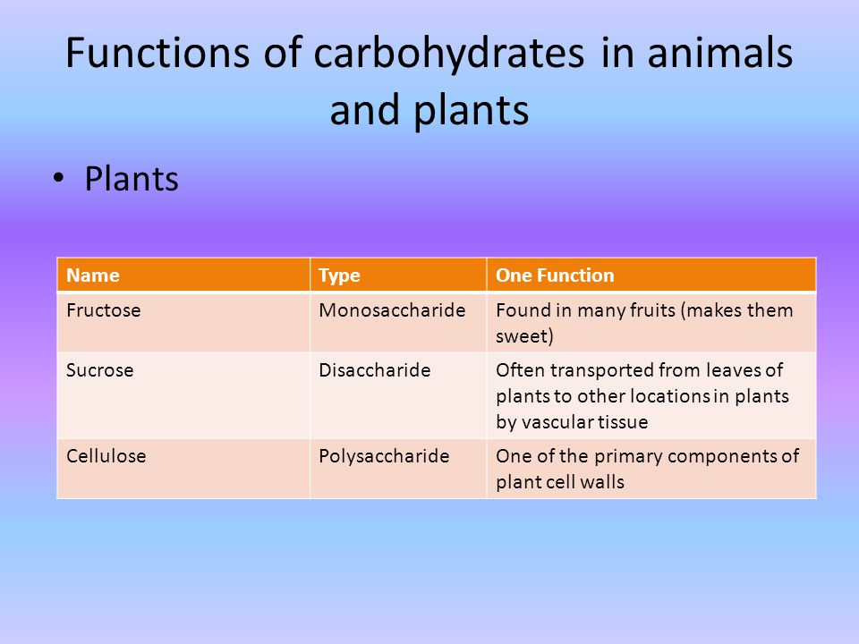 topic 3.2: carbohydrates, lipids, and proteins - ppt download, Human Body