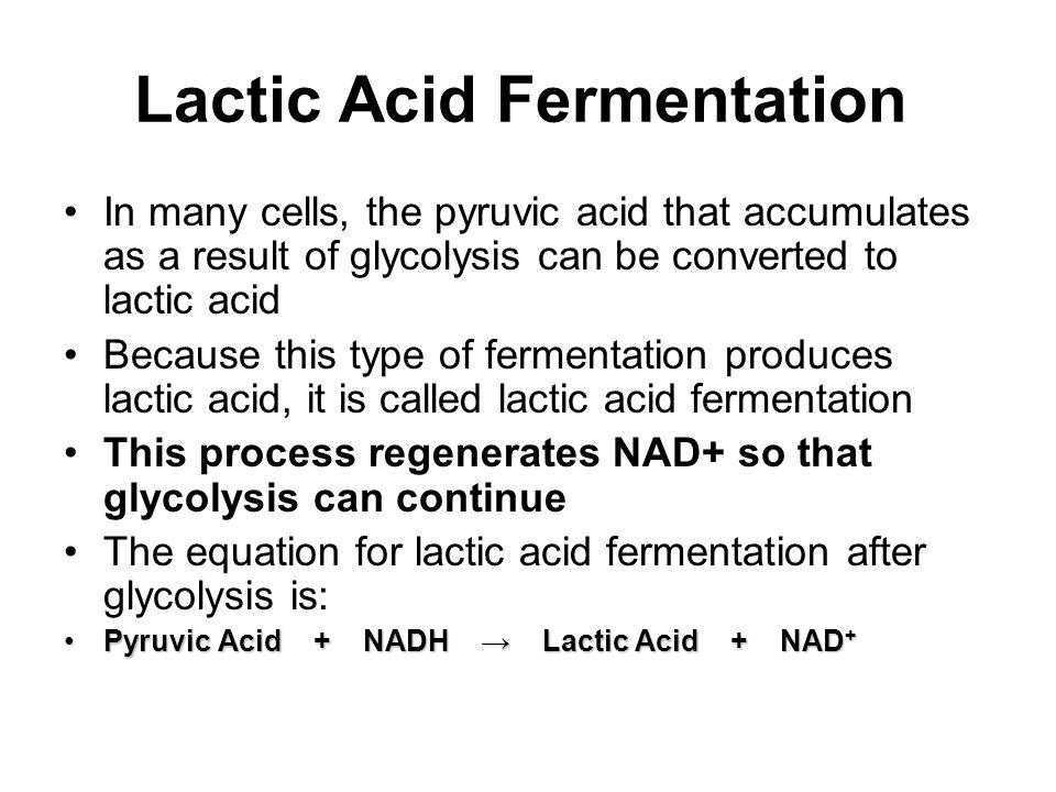 Lactic Acid Fermentation Equation