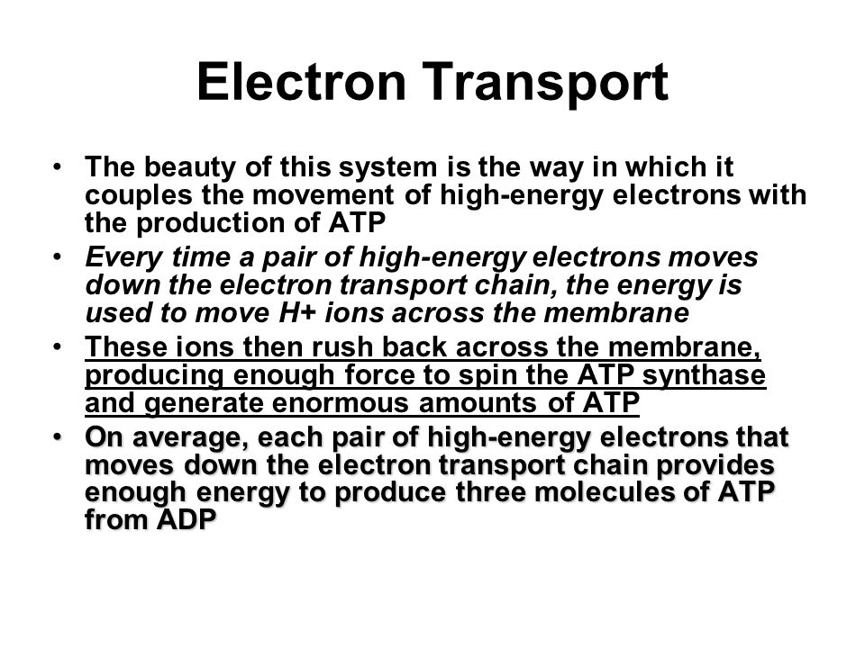 three energy system that are responsible to the production of atp essay Understanding energy systems in training three energy systems atp-pc system anaerobic activities.