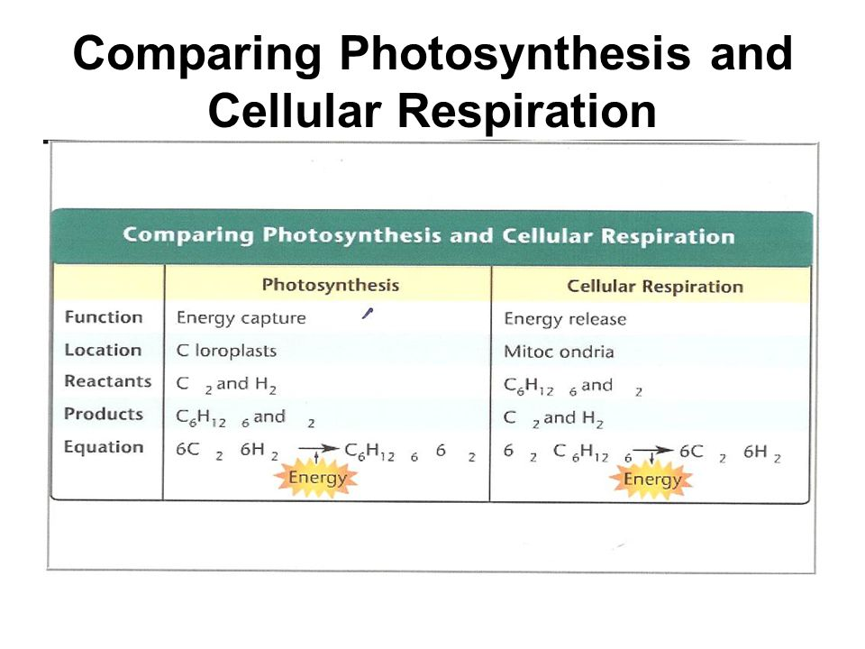 comparing and contrasting photosynthesis and cellular respiration How can the answer be improved.