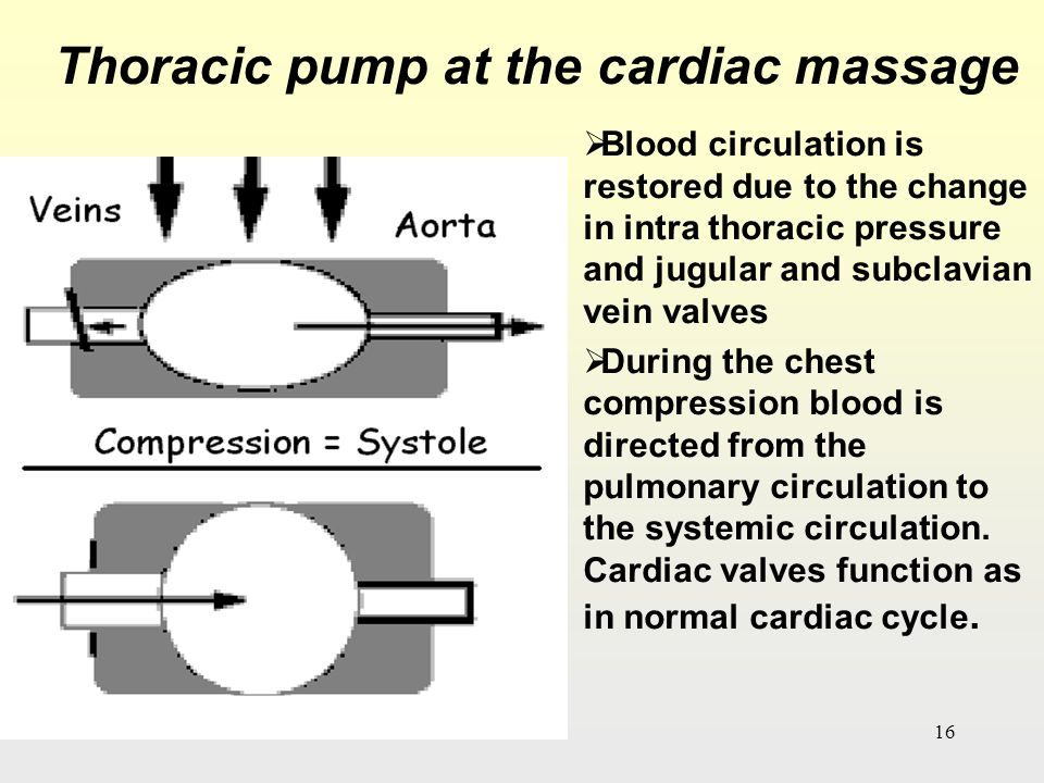 Thoracic pump at the cardiac massage