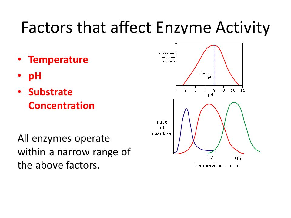factors that influence catalase activity Enzyme lab - free download as pdf file (pdf), text file (txt) factors influencing enzyme activity background factors influencing the activity of catalase several enzymatic variables will be examined in this lab.