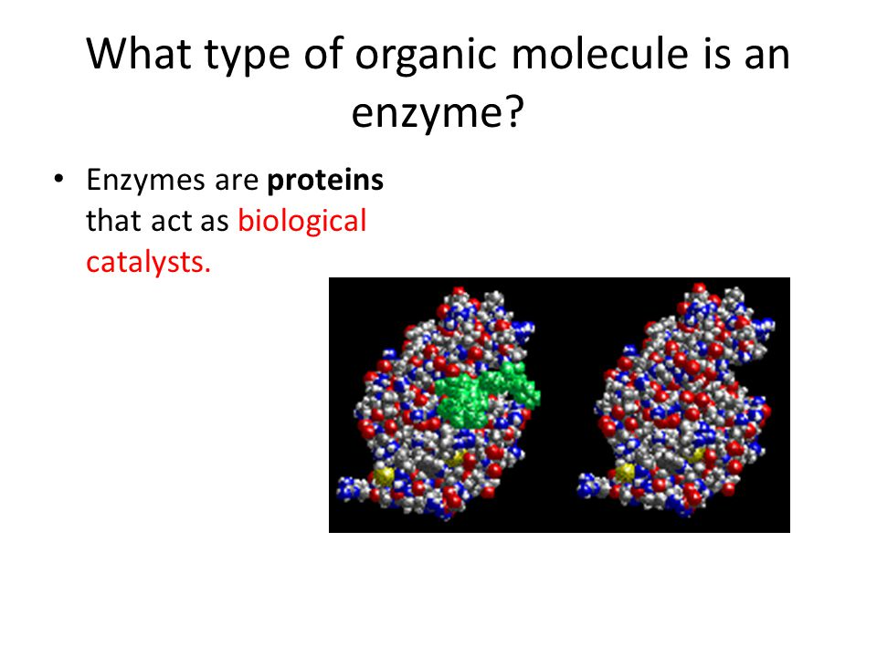 What type of organic molecule is an enzyme