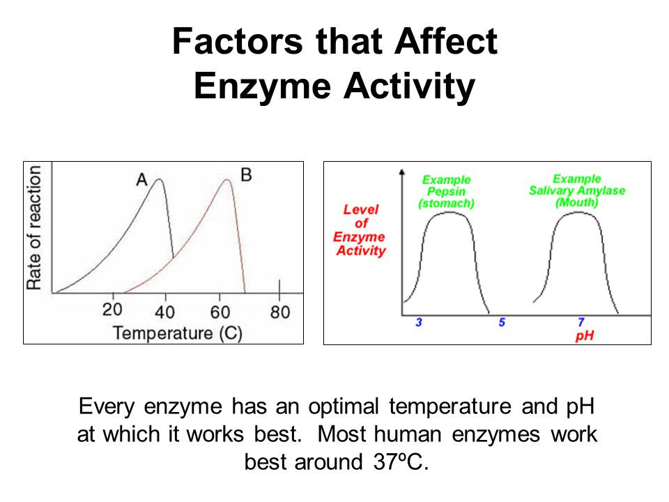 factors that affect how the ph Several factors affect the rate at which chemical reactions proceed understanding them can help you predict the direction and speed of a chemical reaction.