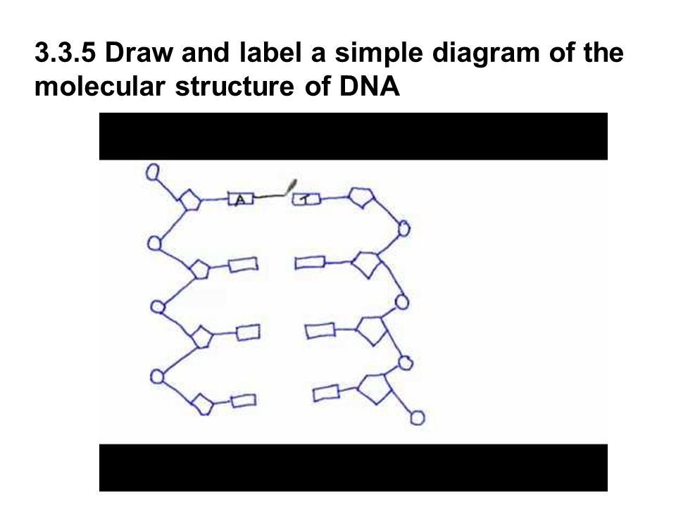 3 3 and 3 4 dna structure and replication