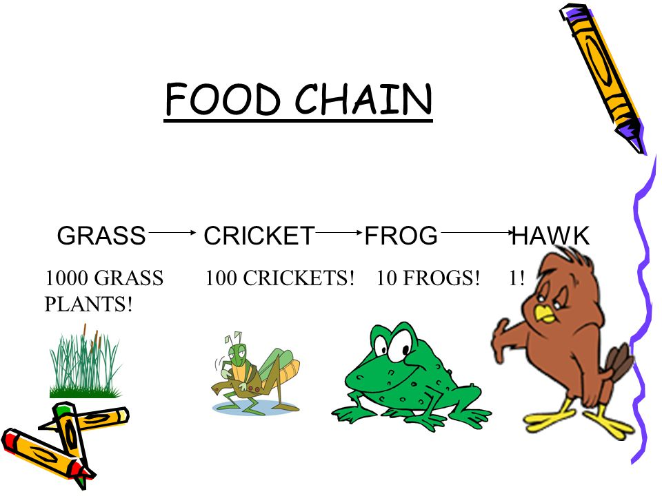 Toad Food Chain Diagram 28 Images Toad Food Chain Diagram Best