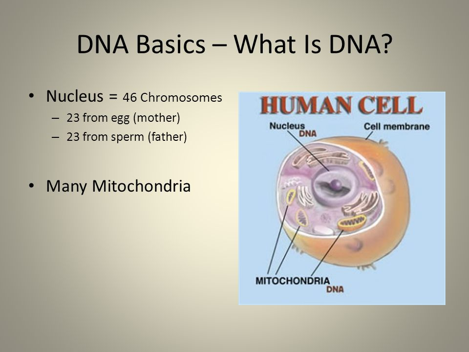 an introduction to deoxyribonucleic acid aka dna Dna stands for (deoxyribonucleic acid) which is made up of very long chains of  chemical  in humans genetic information, also known as our.