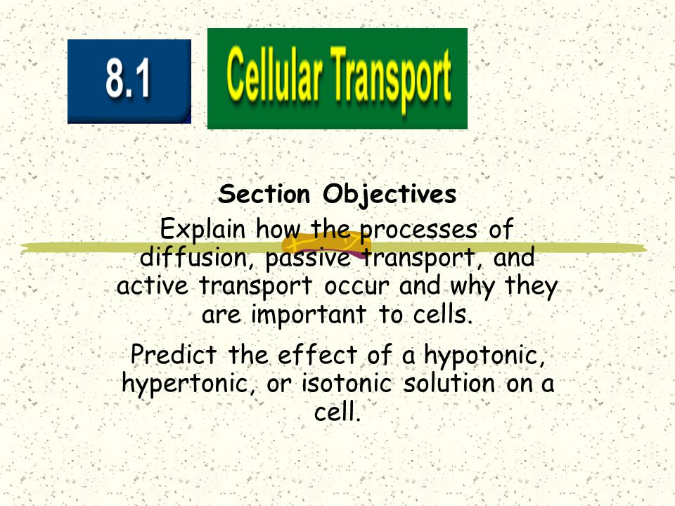 Section Objectives Explain how the processes of diffusion, passive transport, and active transport occur and why they are important to cells.
