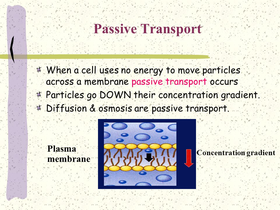 Passive Transport When a cell uses no energy to move particles across a membrane passive transport occurs.