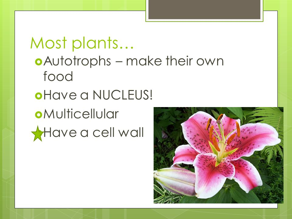 Most plants… Autotrophs – make their own food Have a NUCLEUS!