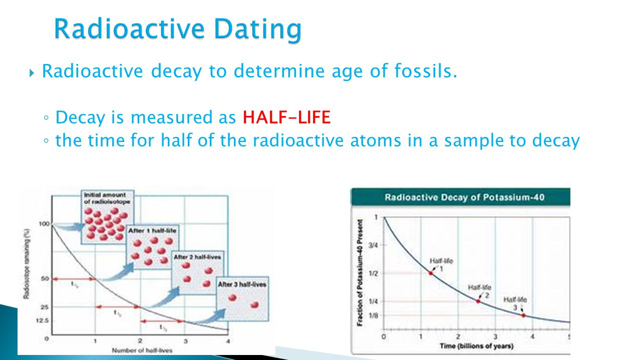 radioactive decay dating fossils It also depends on what you mean by fossil - two types of radioactive dating come to mind how is radioactive decay used to date fossils more questions.