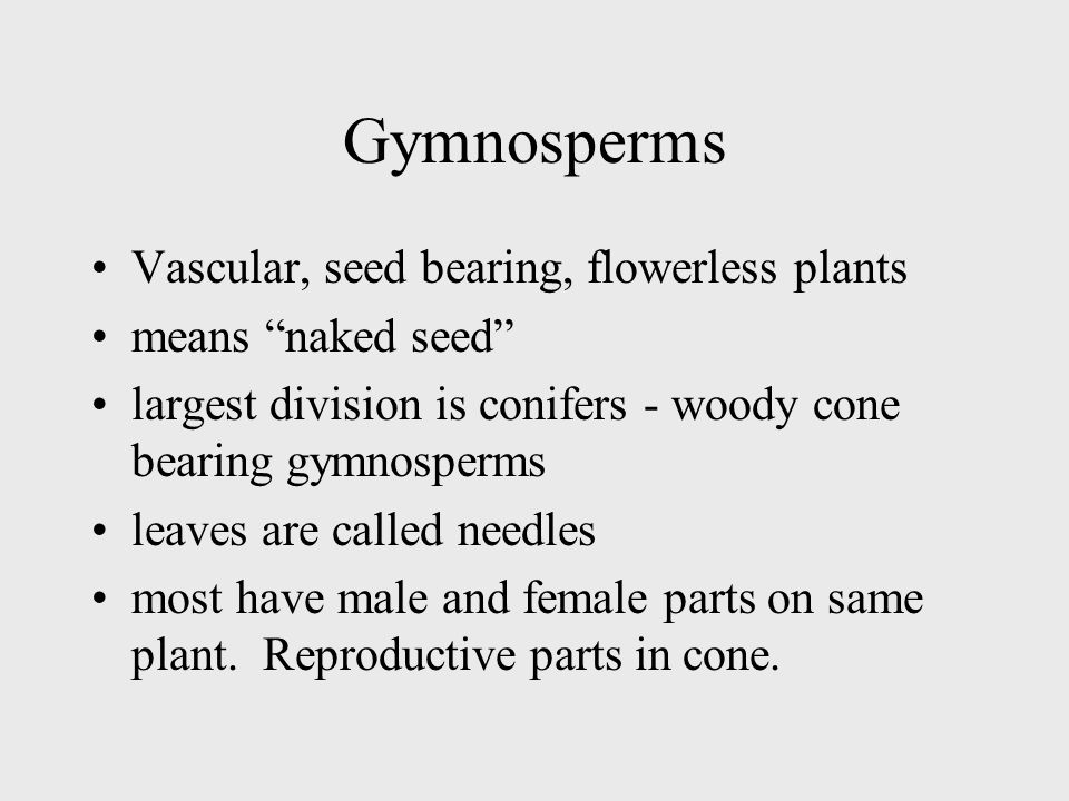 Gymnosperms Vascular, seed bearing, flowerless plants