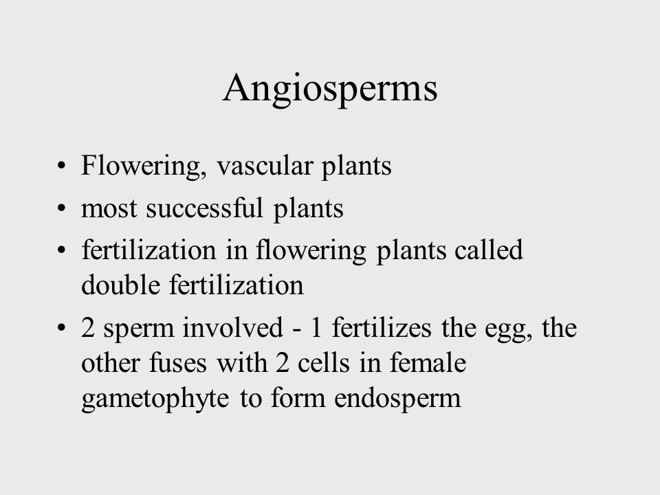 Angiosperms Flowering, vascular plants most successful plants