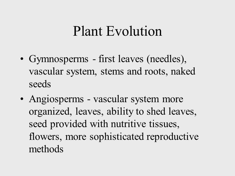 Plant Evolution Gymnosperms - first leaves (needles), vascular system, stems and roots, naked seeds.
