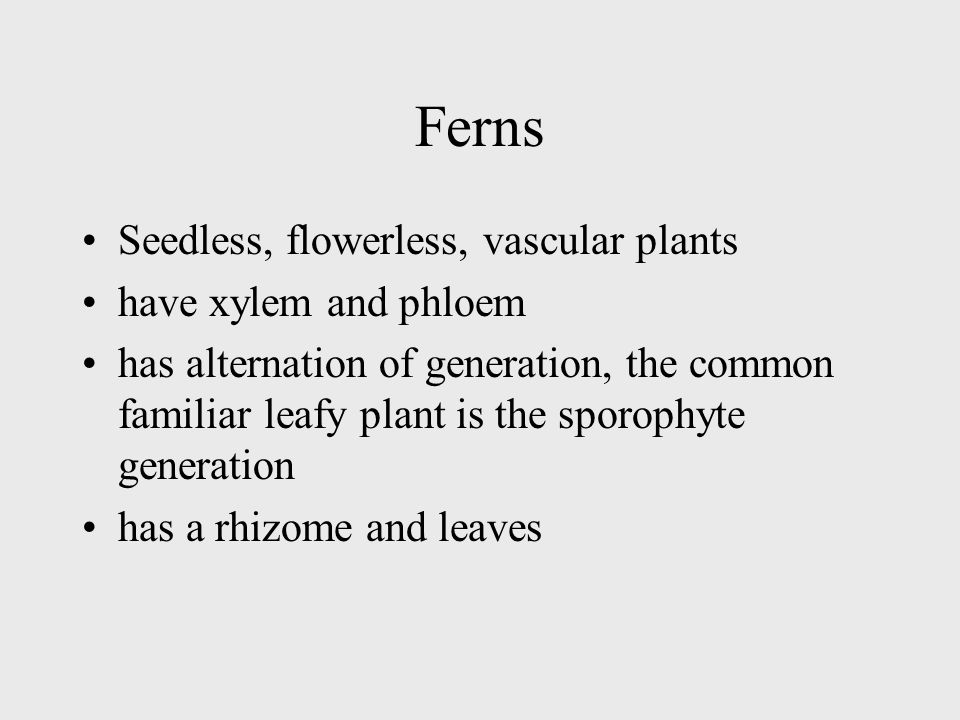 Ferns Seedless, flowerless, vascular plants have xylem and phloem