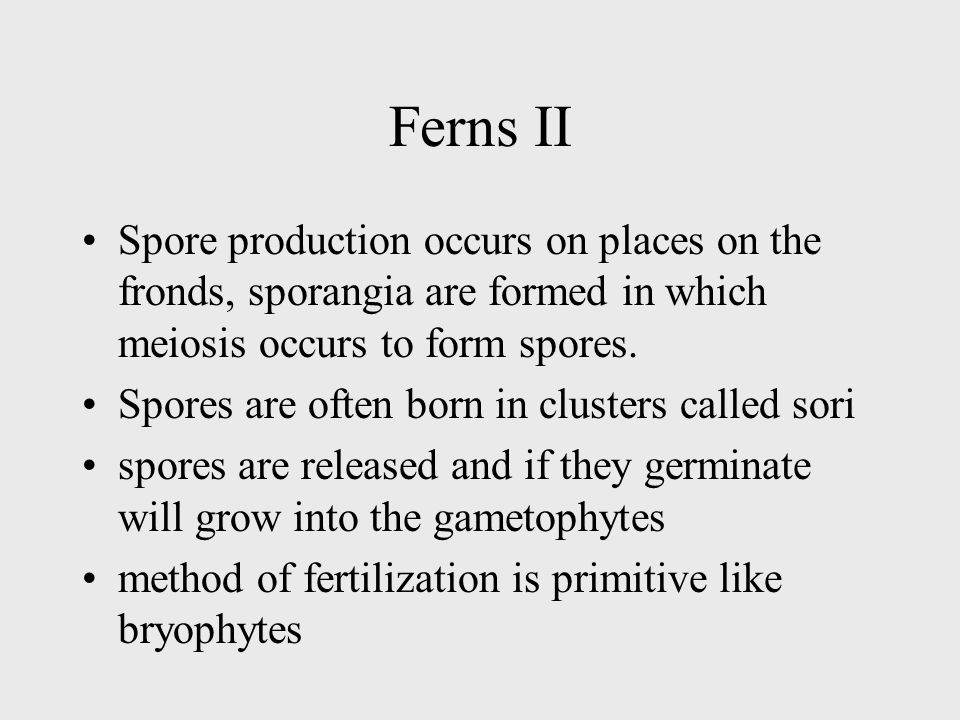 Ferns II Spore production occurs on places on the fronds, sporangia are formed in which meiosis occurs to form spores.