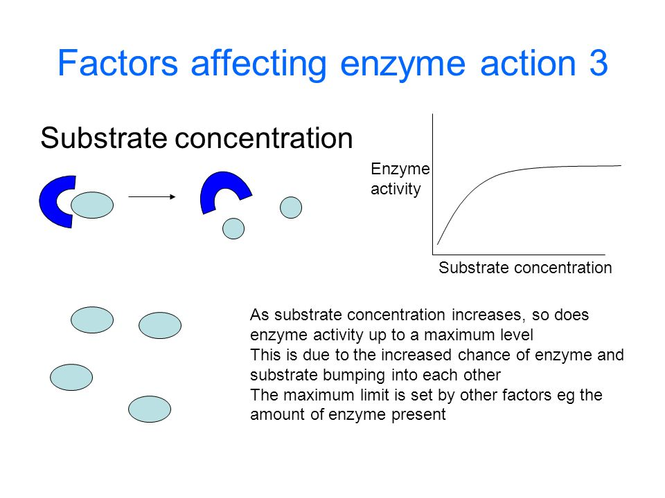 Factors affecting enzyme action 3