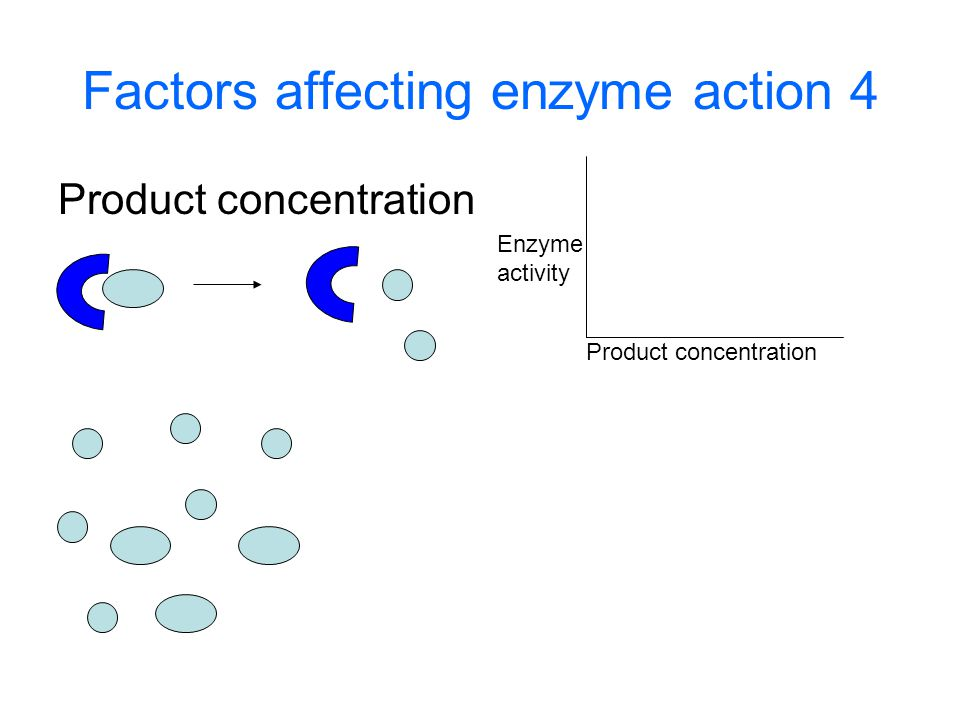 Factors affecting enzyme action 4