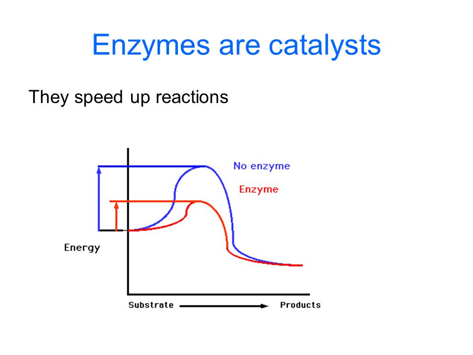 Enzymes are catalysts They speed up reactions