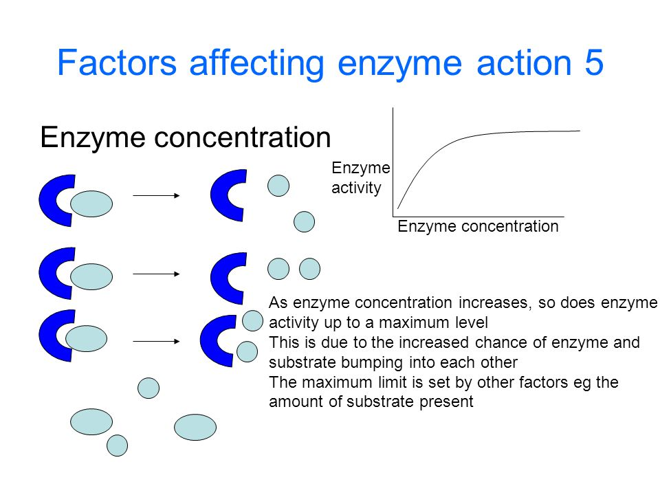 Factors affecting enzyme action 5