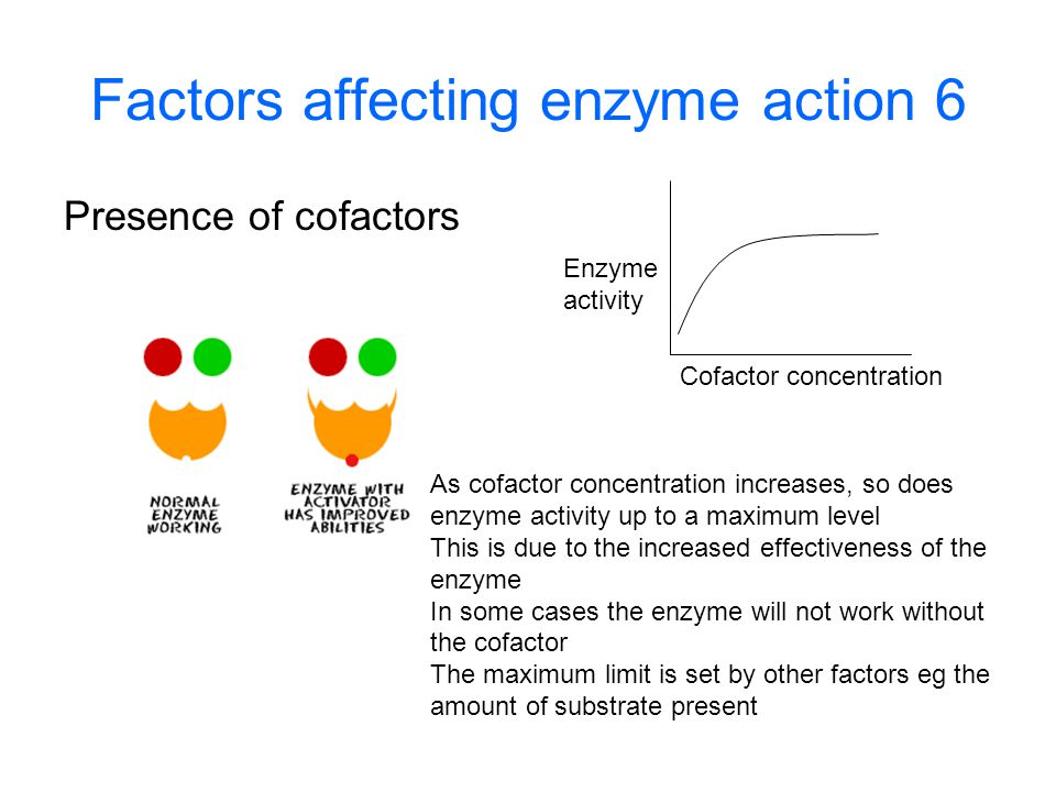 Factors affecting enzyme action 6