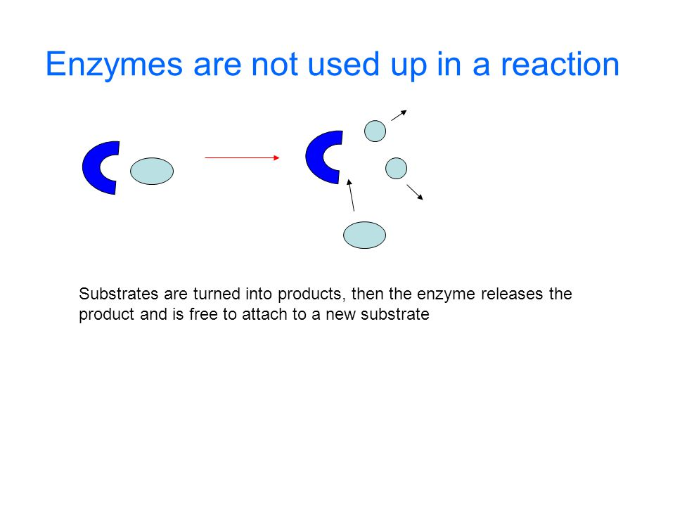 Enzymes are not used up in a reaction